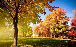 autunno, alberi, caduta, fogliame, traccia