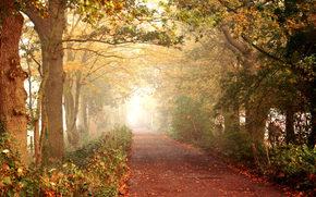 autunno, strada, sentiero, foresta, alberi, fogliame, passeggiare, natura