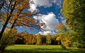 осень, дорога, посадка