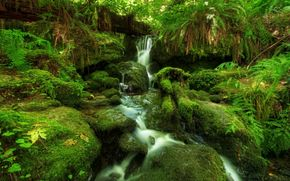 waterfall, forest, fern, moss
