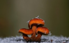 mushrooms, snowflakes