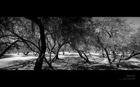 пустыня, лес, черно-белое