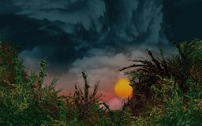 растения, солнце, облака
