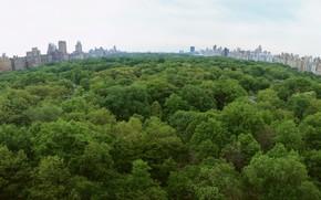 парк, город, деревья