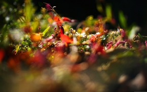 nature, Plants, macro, Flowers, light, rays, photo, picture, background, wallpaper