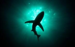 акула, глубина, свет