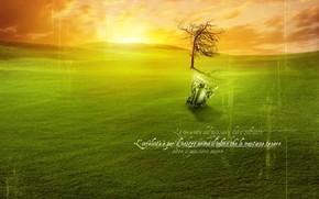 descoberta, pr do sol, artefato, nascer do sol, jogo, gramado verde