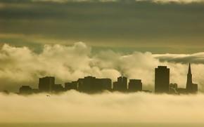 туман, здания, чайка