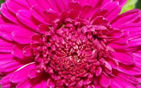 цветы, фиолет, дубки