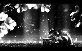 Sonhos, raios, gatinho, Sonho, trevas, Flores