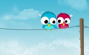 filo, Uccelli, amore