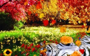 tiger, nature, bright colors, heat, Flowers, Trees, leaves, grass