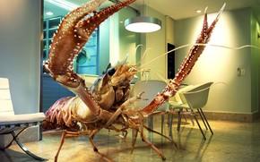 giant, shrimp, room
