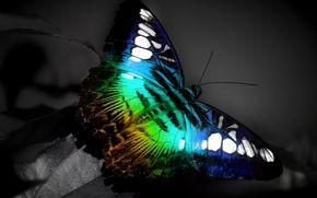 butterfly, color, spectrum