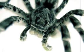Macro, spider, eyes