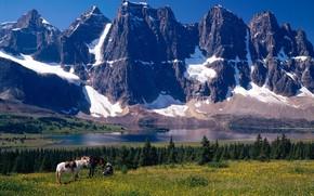 джаспер парк, альберта, канада, горы, деревья