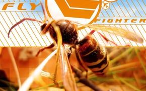 пчела, линии, квадраты