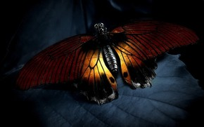 mariposa, luz, lista
