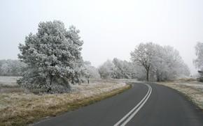 road, Trees, snow
