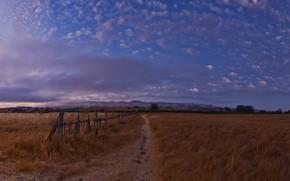 поле, небо, вечер