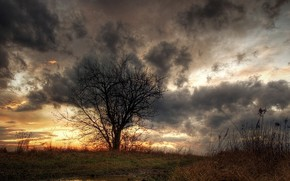 tree, puddle, grass, clouds