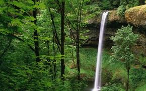 Wasserfall, Greens, Wald