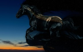 horse, evening, night