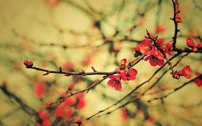 branche, Fleurs, rognons