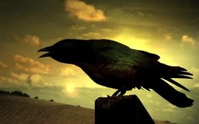 ворон, поле, мистика