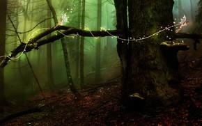 albero, foresta, Elfi