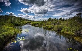 swamp, water, clouds, Trees
