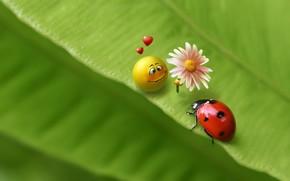 лист, смайл, жук, зеленый