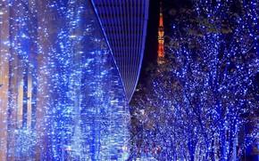 подсветка, деревья, огоньки