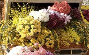 цветы, розы, прилавок