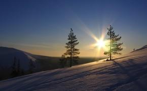 snow, Trees, sun, sky