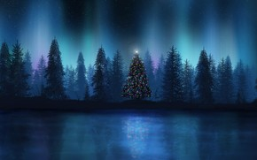 forest, Lights, radiance, new year