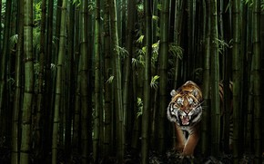 虎, 竹, 青菜