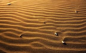 sabbia, conchiglie