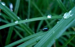 жук, трава, капли
