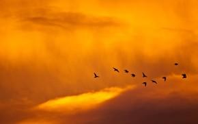 птицы, небо, минимализм