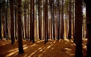 Bume, Wald, Licht