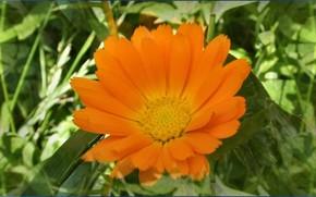 sol, Flores, amarelo
