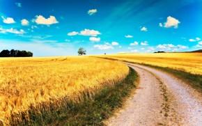 droga, pole, niebo, chmury