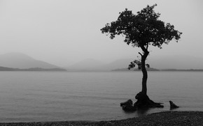 черно-белая, озеро, дерево