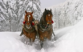 winter, sledge, Beautiful, Horse, snow, Trees, deep, drifts