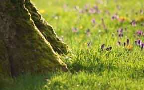 树, 草, 花卉, 绿色