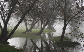 Trees, water, fog, reflection