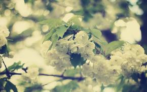 белые, цветы, цветение, листья, ветви, весна, красота, размытость, боке, нежность