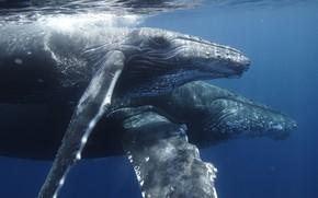 киты, пузыри, вода