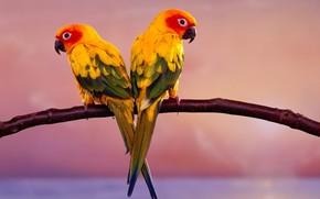 Parrots, branch, Birds